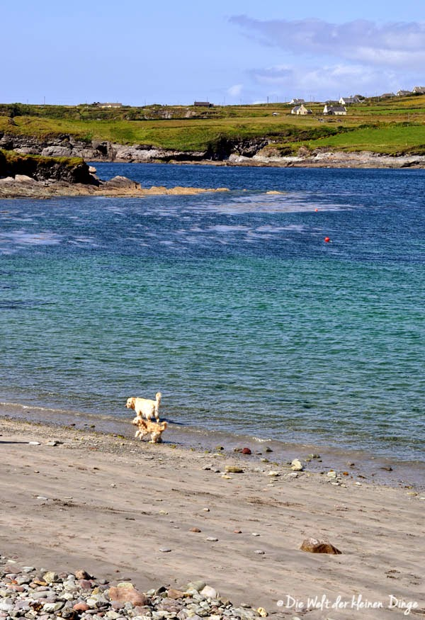 Irland: Ring of Kerry - Strand von Reencaheragh