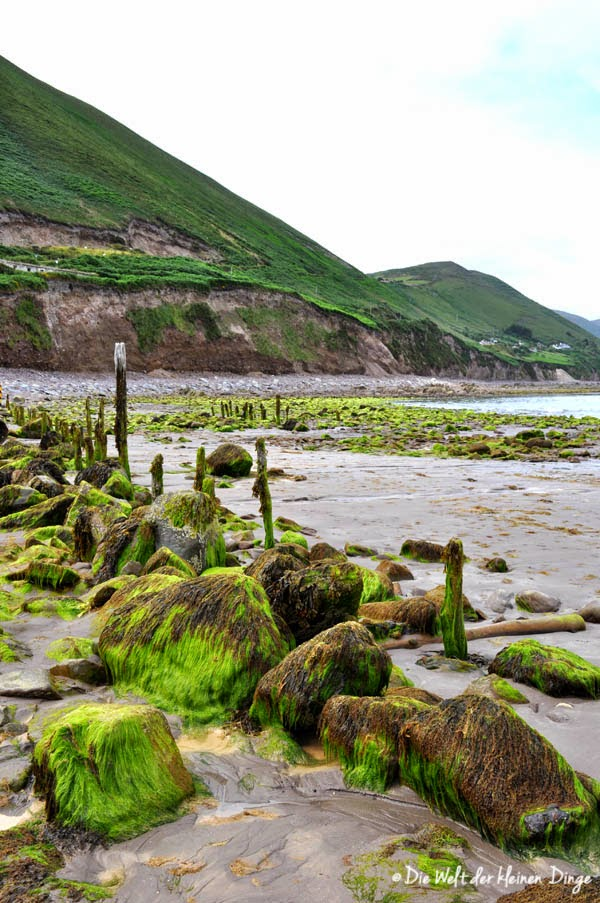 Irland: Ring of Kerry - Rossbeigh Beach